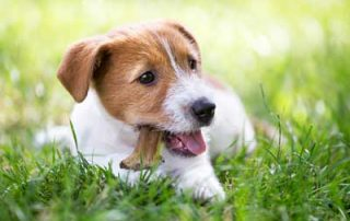 Giving Your Dog Healthier Treats