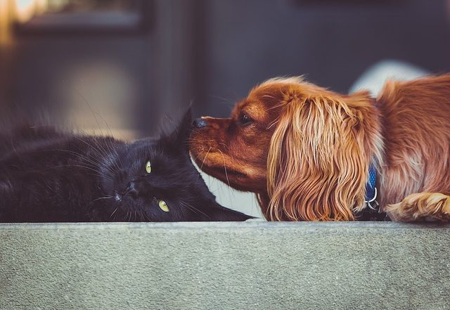 Cats vs Dogs: Which is Best for me?
