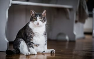 Best Pet Foods for Overweight Cats