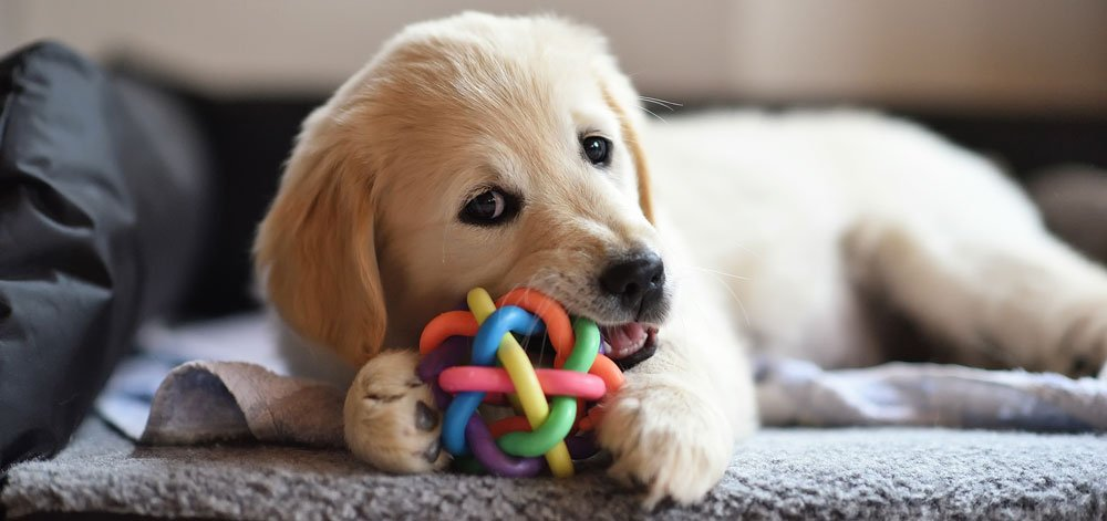 Choosing the Right Toy for Your Dog