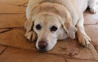 10 Reasons Your Dog Can't Lose Weight