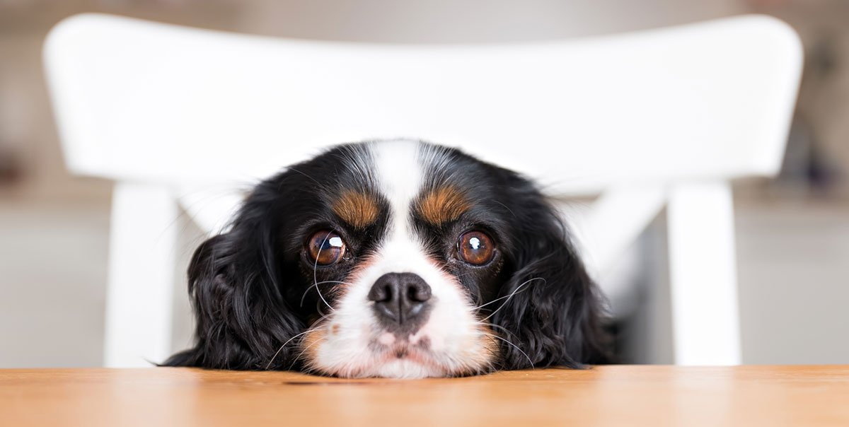 Healthiest Dog Foods for Small Breeds