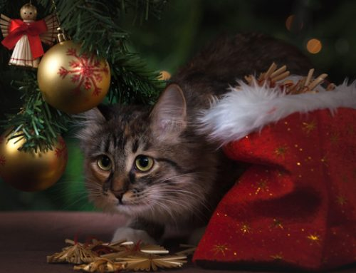5 PURRfect Christmas Gifts for Your Cat