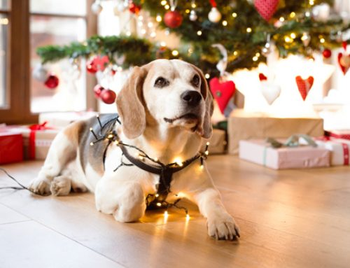 The 10 Best Christmas Dog Toys of 2019