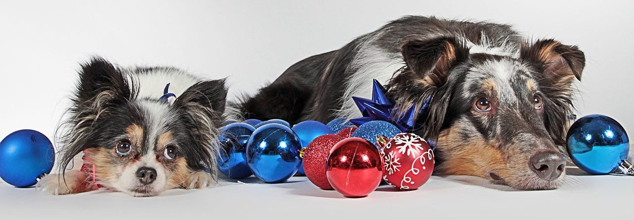 best christmas toys for dogs